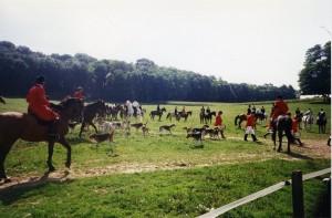 Participation a une chasse  au renard en Alsace (avec un leurre) et un équipage allemand