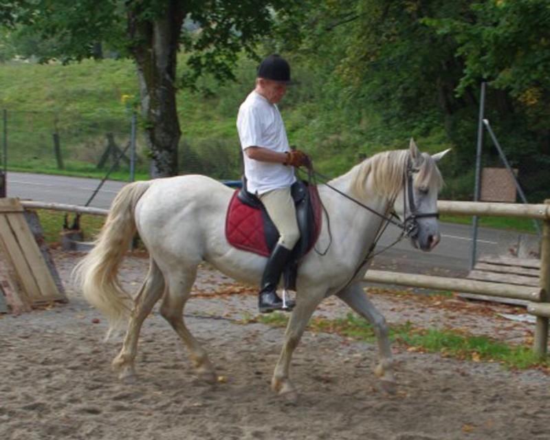 patrice-equitation